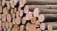 Round Timber for Sale